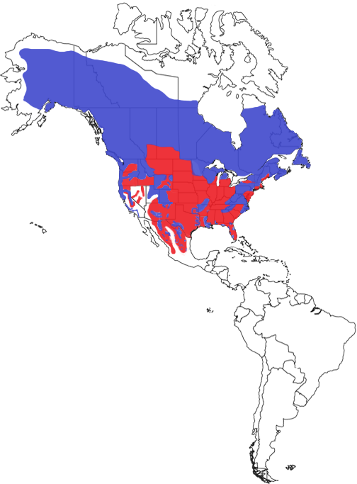 American Black Bear Species Range Map