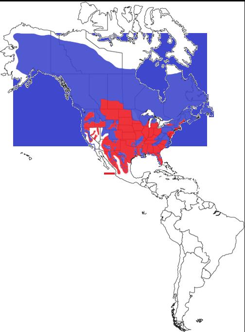 American Black Bear Species Range Map