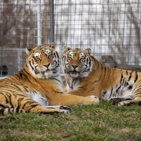BB King & Mack Tigers
